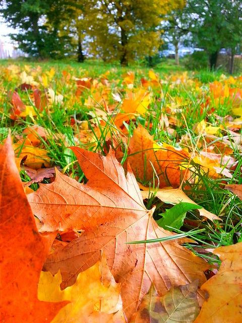 crisp autumn
