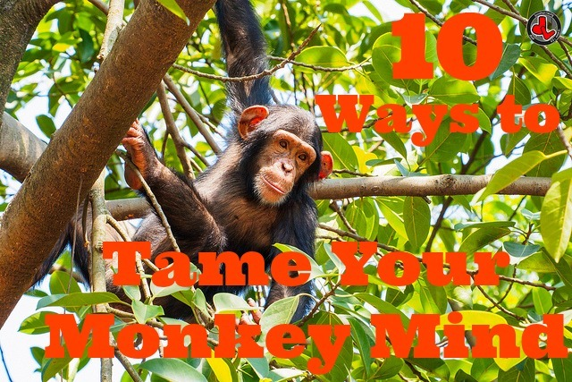 tame your monkey brain